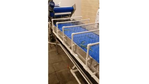 خط تولید کامل شست و شو و بسته بندی سبزیجات تازه