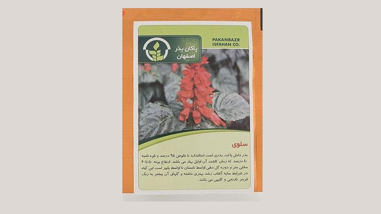 بذر گل خانگی سلوی