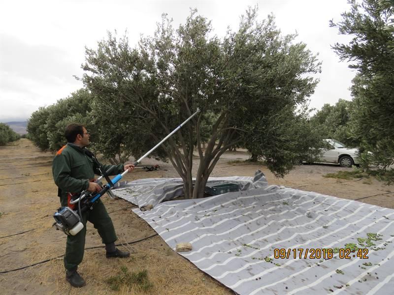 دستگاه برداشت محصولات درختی مدل دوشی