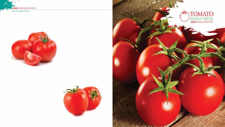 بذر گوجه فرنگی سوپر استار