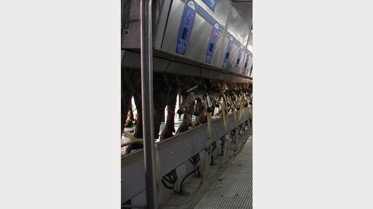 دستگاه شیردوشی بوماتیک , دستگاه شیردوش گاو