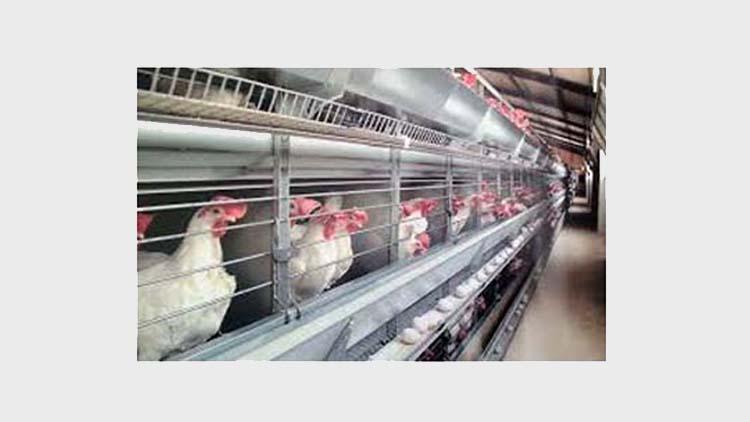 قفس مرغ تخم گذار