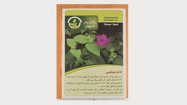 بذر خانگی لاله عباسی , بذر