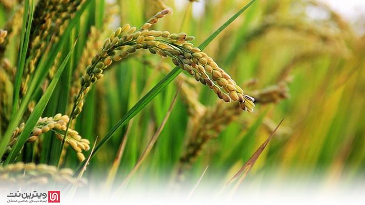 تسهیلات دریافت وام کشاورزی از بانک های ایران به شرح زیر است