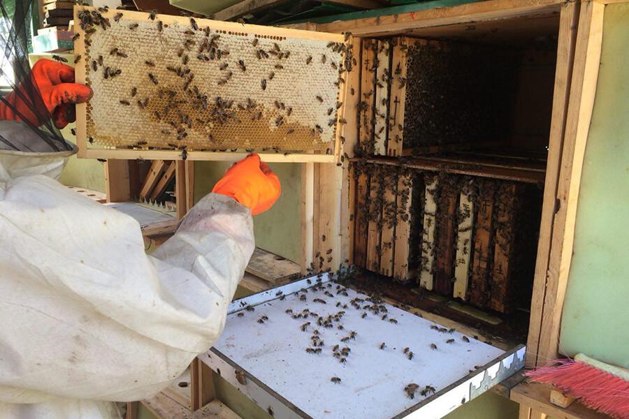 کندوی کابینی-کندوی عسل جدید-قیمت کندو-فروش کندو عسل