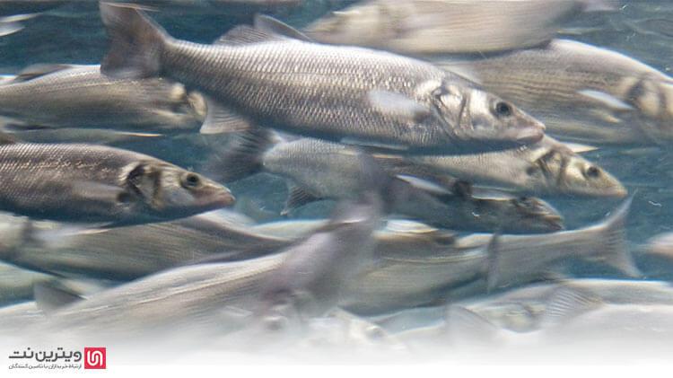 در این مقاله قصد داریم تا اطلاعات مختصری در رابطه با تجهیزات پرورش ماهی، دستگاه هوادهی آبزیان (اسپلش) و وان پرورش ماهی در اختیار شما قرار دهیم.